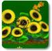 种花酿蜂蜜